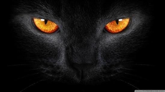 black_cat_5-wallpaper-1920x1080